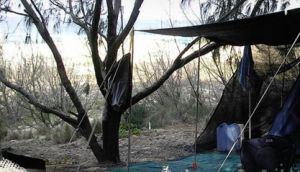 Main Beach Foreshore Camping Grounds - Accommodation Broome