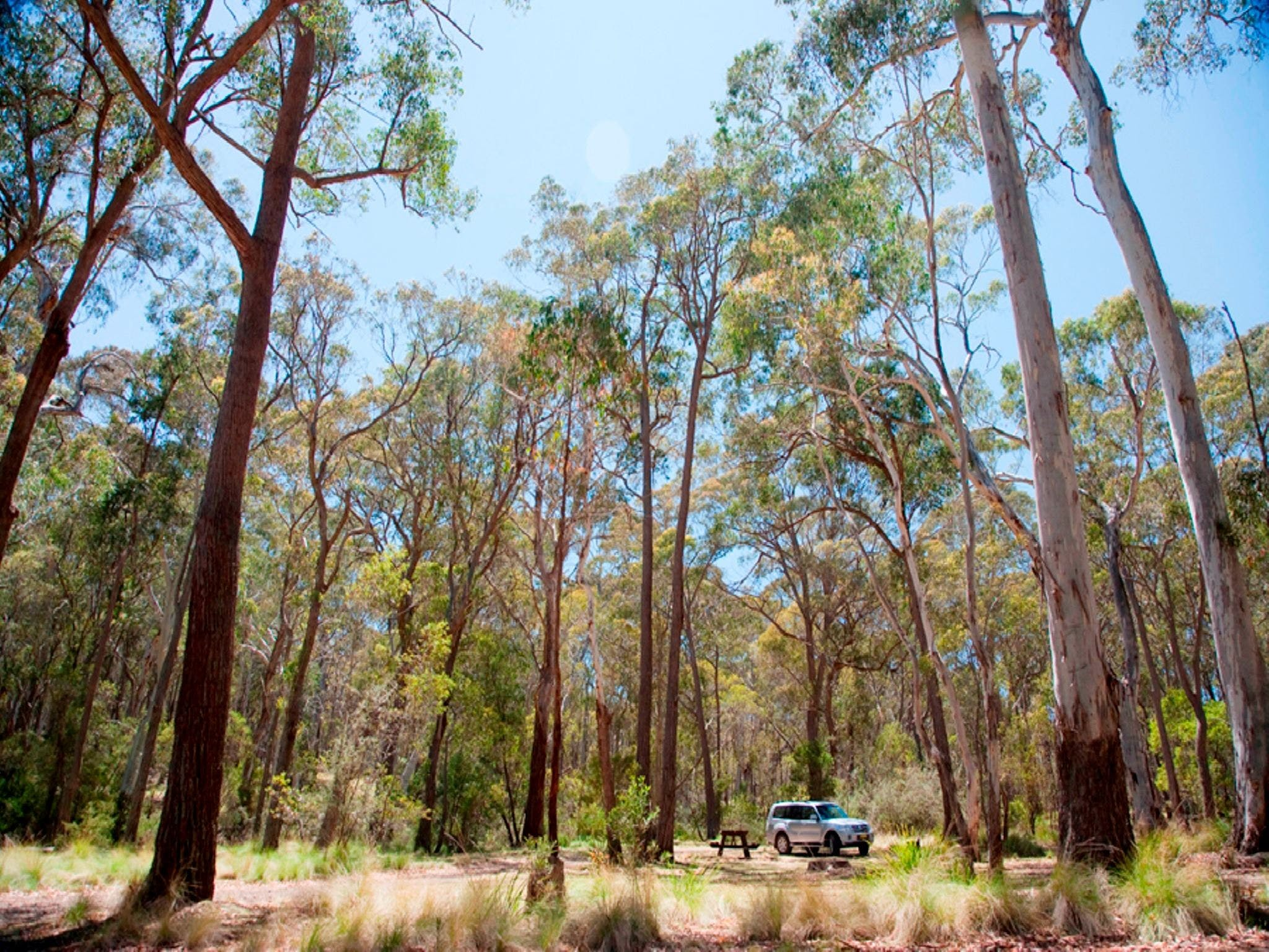 Coolah Tops National Park Camping - Accommodation Broome