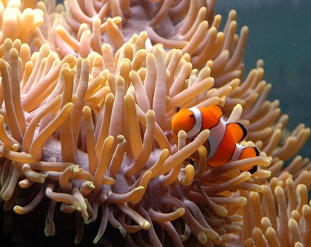 Reef HQ Great Barrier Reef Aquarium - Accommodation Broome