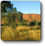 Uluru - Kata Tjuta National Park - Accommodation Broome