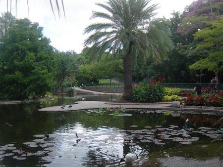 Brisbane City Botanic Gardens - Accommodation Broome