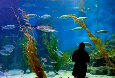 Melbourne Aquarium - Accommodation Broome