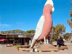 The Big Galah - Accommodation Broome