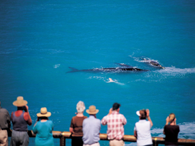 Whale Watching At Head Of Bight - Accommodation Broome