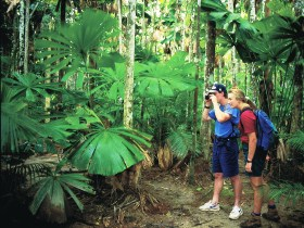 Mount Sorrow Ridge Trail Daintree National Park - Accommodation Broome