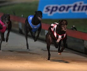 Dapto Dogs - Accommodation Broome