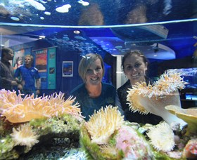 Solitary Islands Aquarium - Accommodation Broome