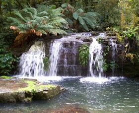 Barrington Tops National Park Walks - Accommodation Broome