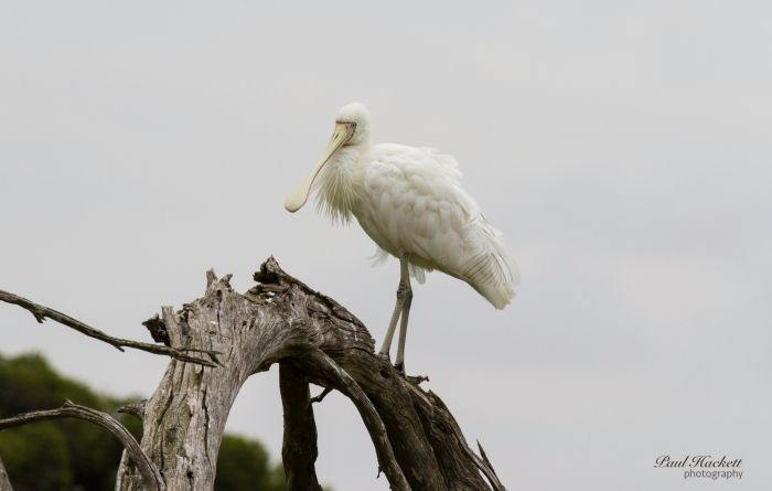 Melbourne Birding Tours - Accommodation Broome