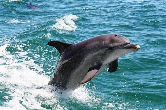 Half-Day Mandurah Canals  Dolphin Watch Tour - Accommodation Broome
