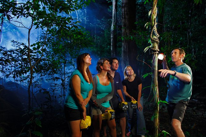 Daintree Rainforest Night Walk from Cape Tribulation - Accommodation Broome