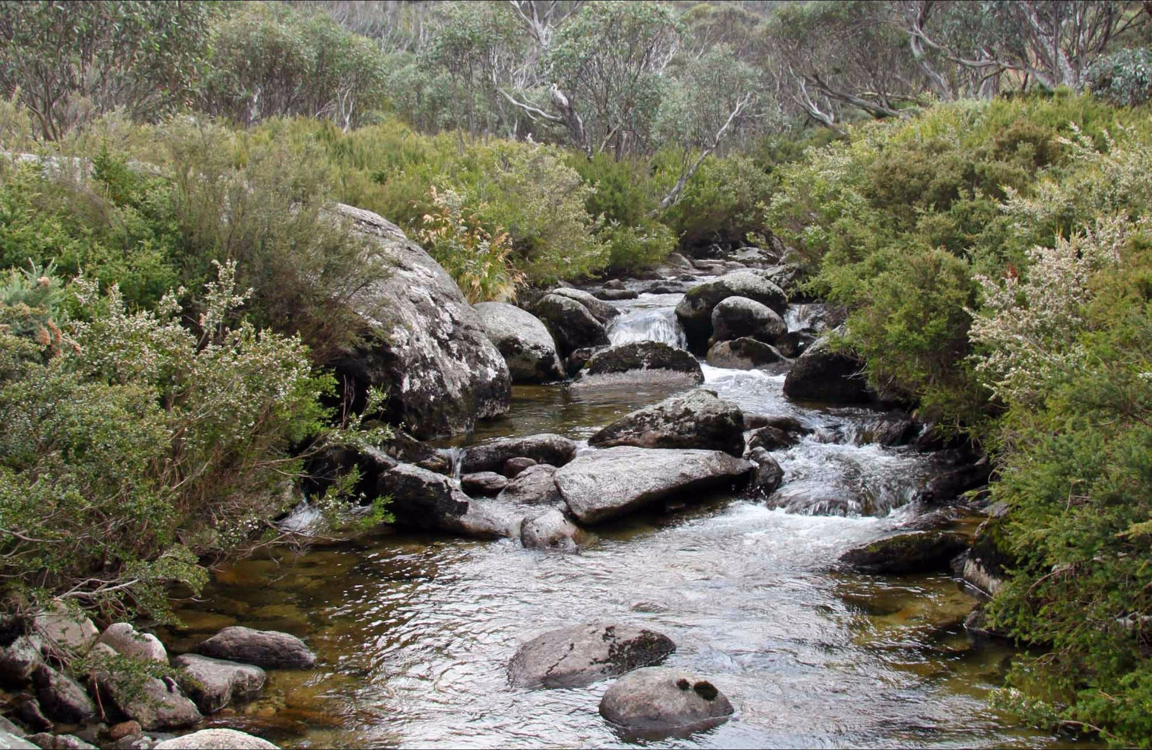 Thredbo River Track - Accommodation Broome