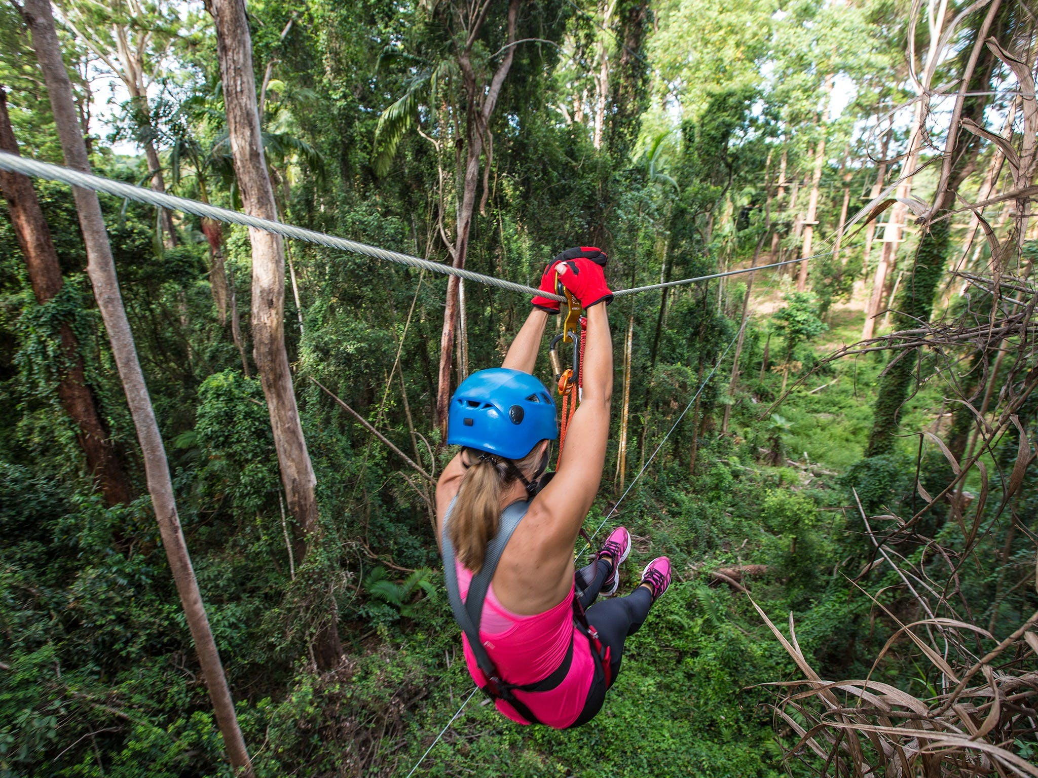 TreeTop Challenge - Sunshine Coast - Accommodation Broome
