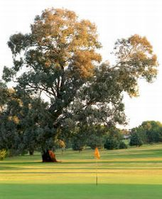 Cowra Golf Club - Accommodation Broome