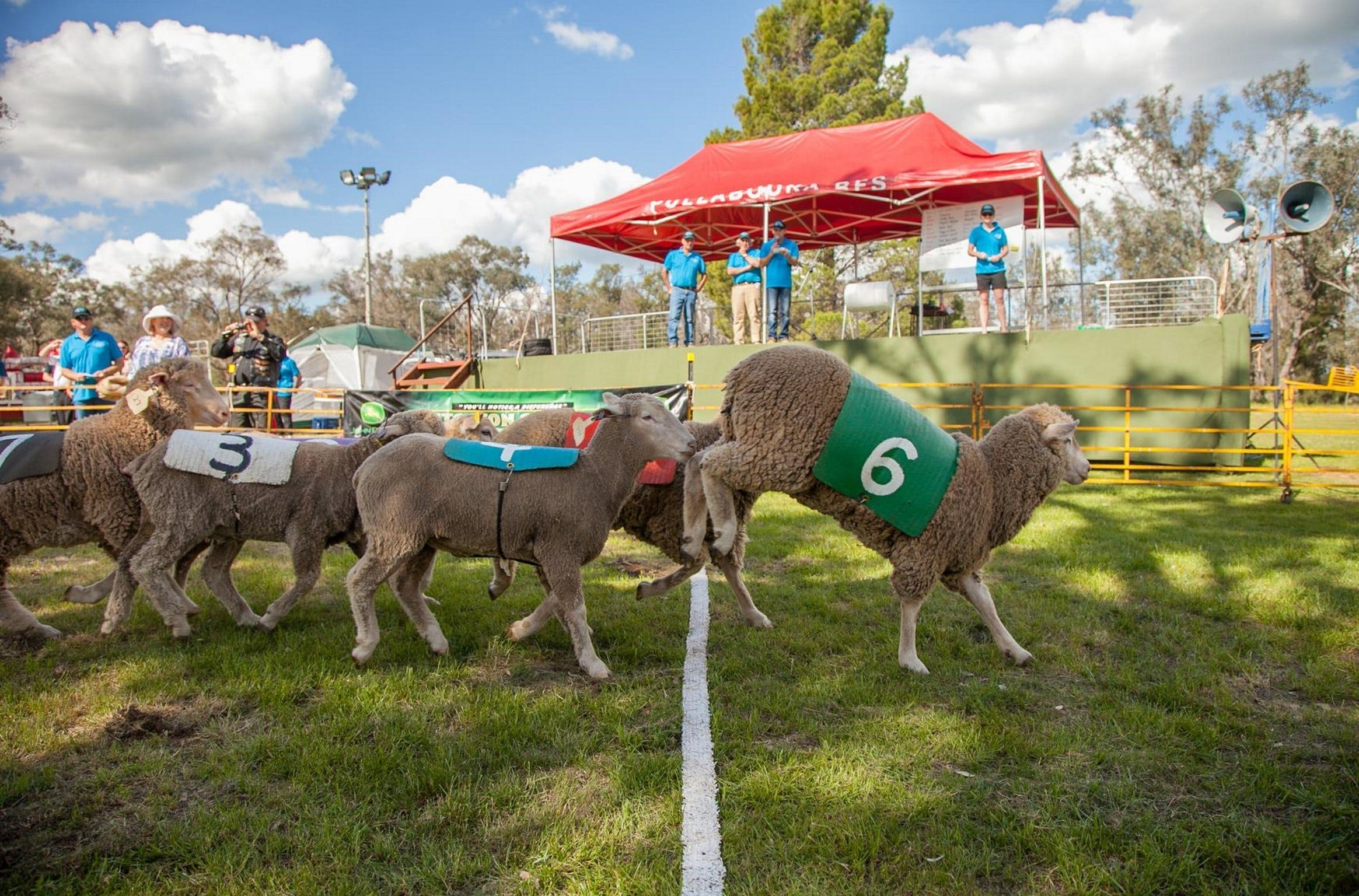 Caragabal Sheep Races - Accommodation Broome