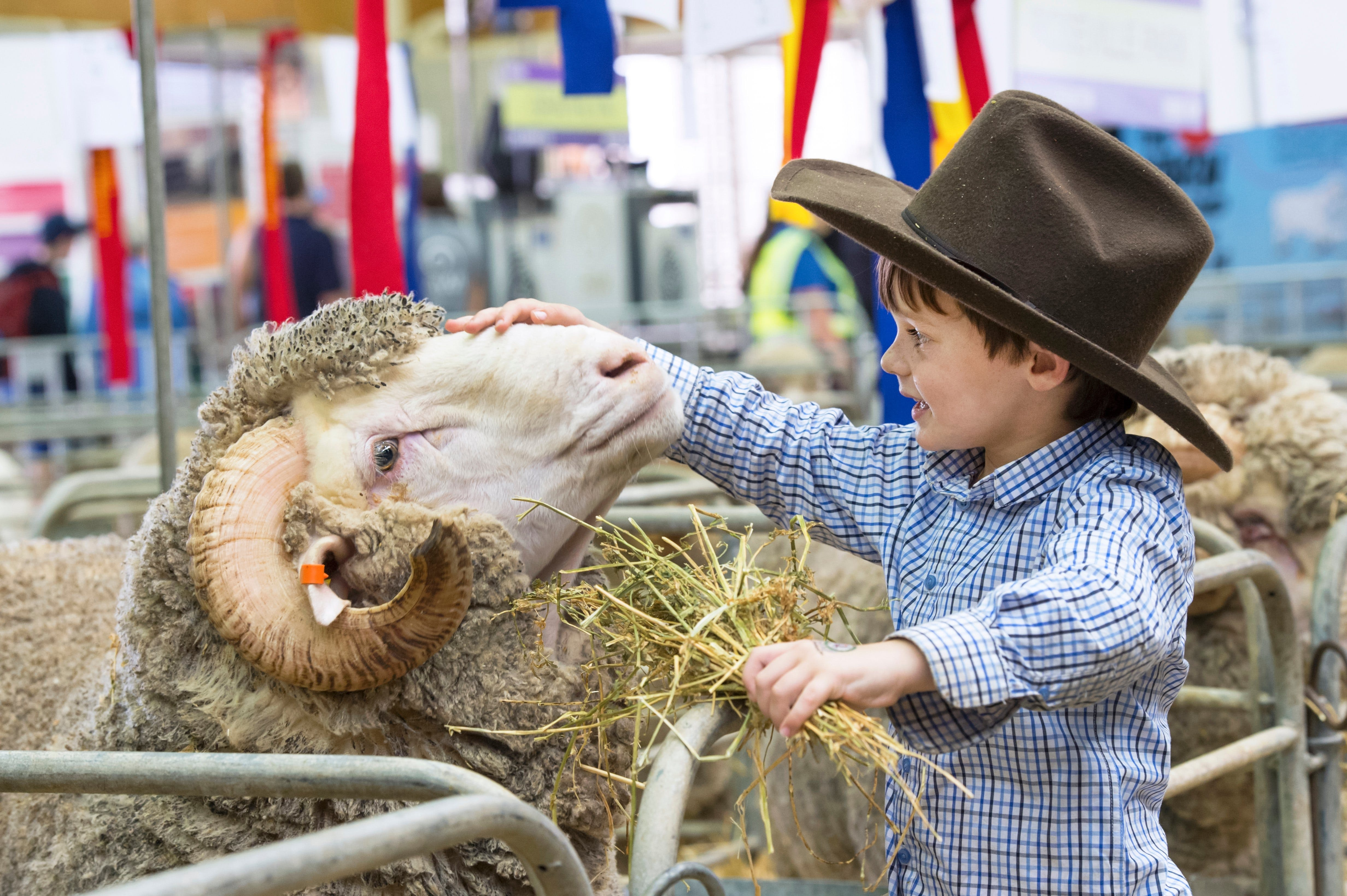 Sydney Royal Easter Show - Accommodation Broome
