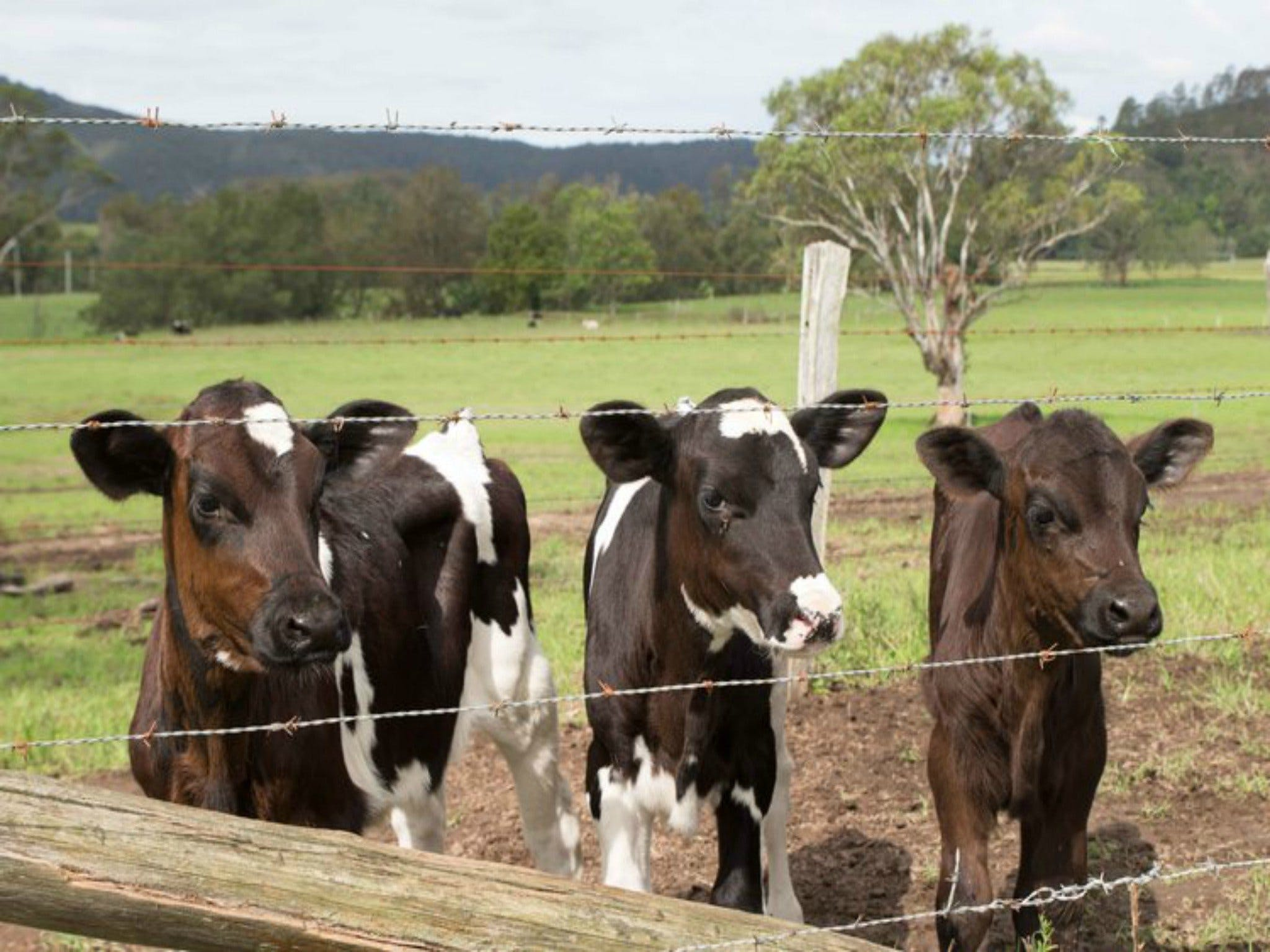 Bandon Grove Farm Tours - Accommodation Broome
