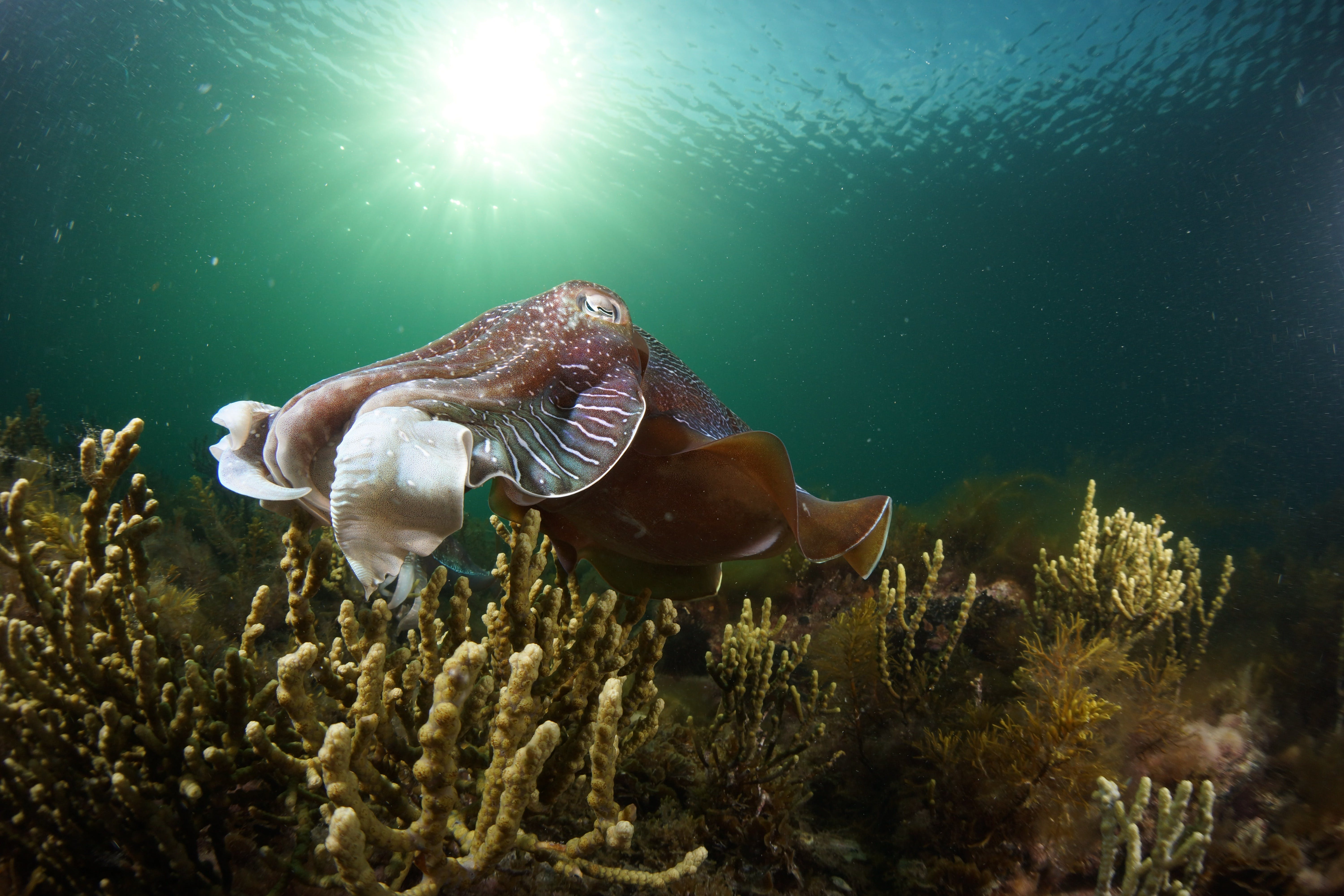 Cuttlefish Diving  Snorkeling EVERYDAY May -August - Accommodation Broome