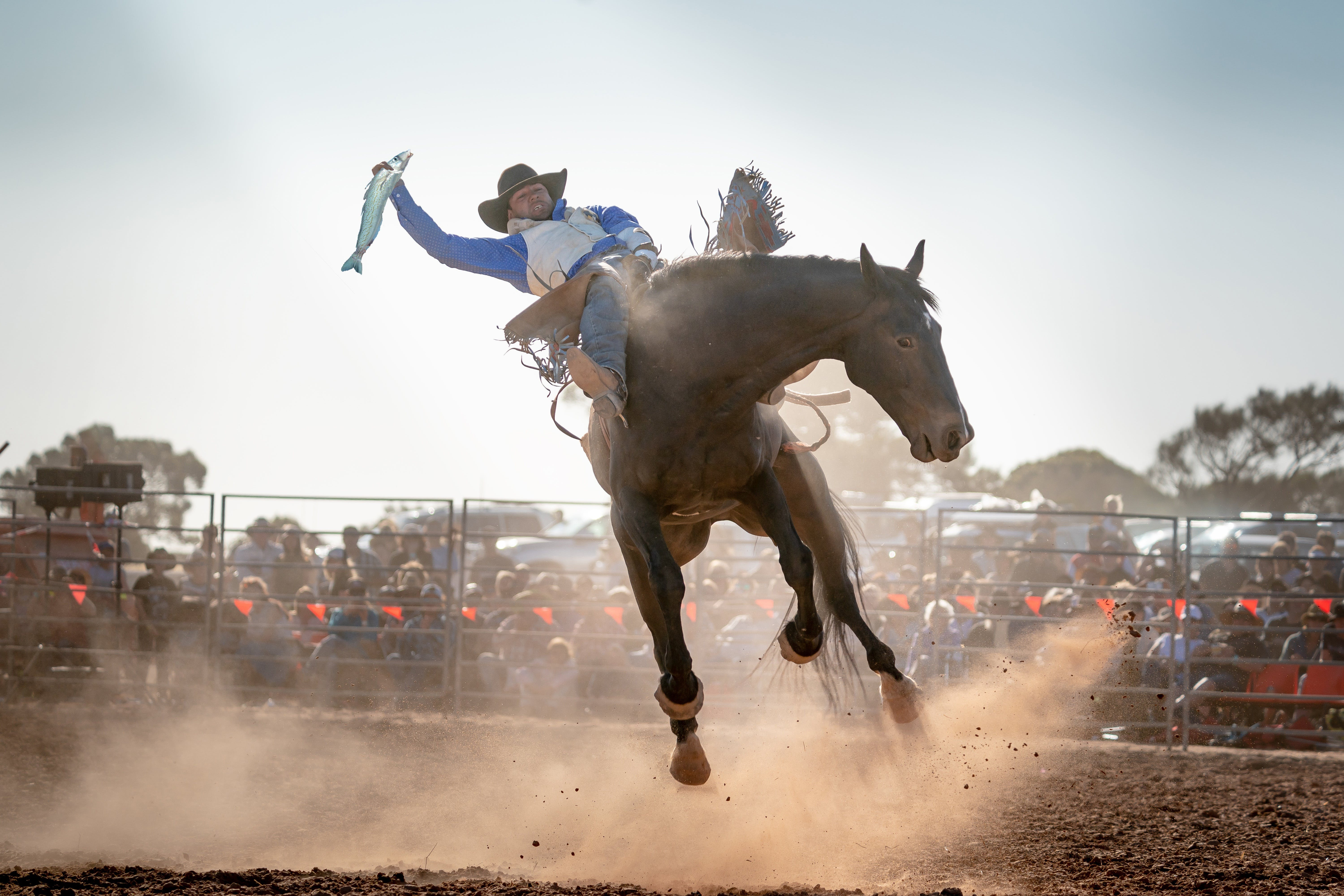 Rodeo by the Sea - Streaky Bay - Accommodation Broome